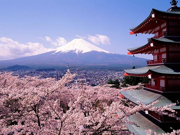 Hướng Dẫn Chi Tiết Các Thủ Tục, Giấy Tờ Cần Thiết Khi Sống Tại Nhật