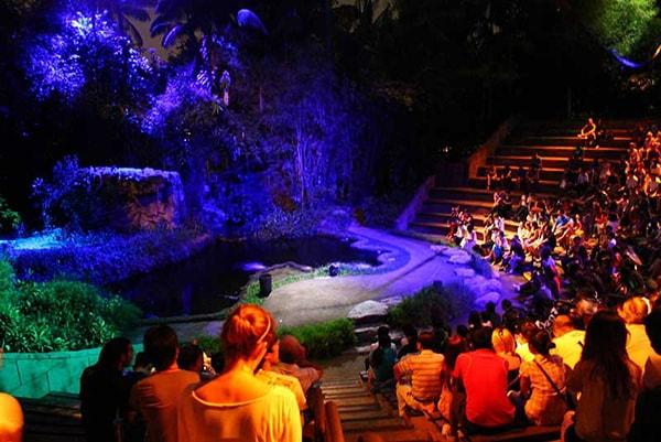 Tận hưởng bầu không khí huyền ảo và hoang dã tại Night Safari
