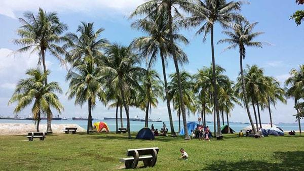 Công viên East Coast nằm rất gần bờ biển, với những hàng cây xanh mướt mát