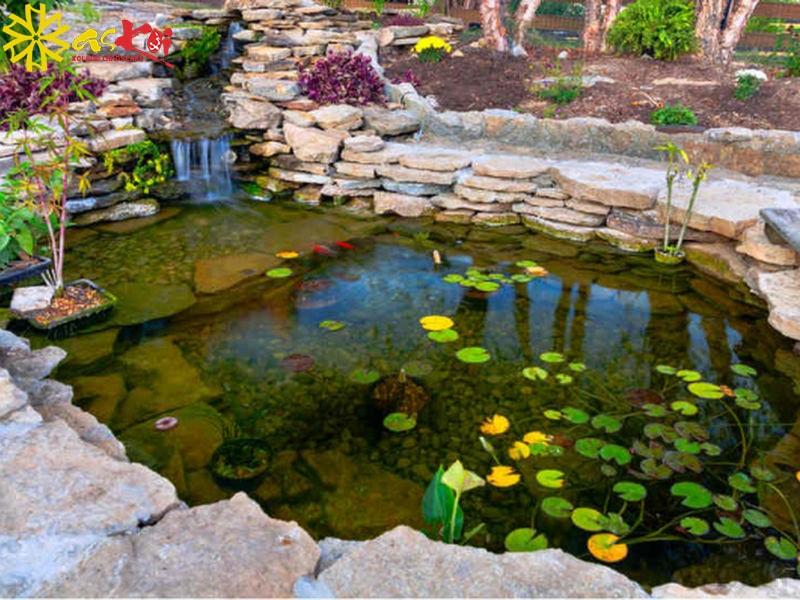 Trang trí cây hoa sen trong hồ cá giúp làm đẹp cảnh quan